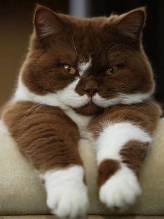 Choco-vanille tel est mon surnom de chat détective!!! Chut... On nous écoute...