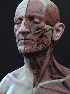 Ecorche side, adam skutt on ArtStation at https://www.artstation.com/artwork/ecorche-side