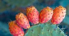 Edible ftuit of Mediterranian cactus Ant Crafts, Prickley Pear, Pear Fruit, Cooking Recipes, Healthy Recipes, Healthy Food, Ficus, House Plants, Healthy Living