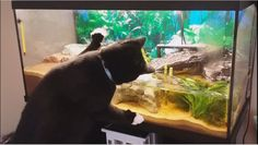 Here's a video about how Fivel react near our fish tank. He want to catch that mudskipper :p. Fivel and Soteline fights about view time in front of the tank!