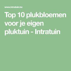 Top 10 plukbloemen voor je eigen pluktuin - Intratuin