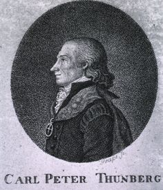Swedish Botanist and Doctor: Carl Peter Thunberg (1743 – 1828). Known for his exploration in South Africa and Japan.