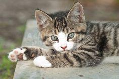 Pet Photography - Cat Photography - Kitten Photo Shoot