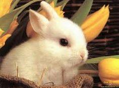 """Képtalálat a következőre: """"húsvéti nyuszik"""""""