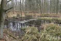 Waterloopbos Marknesse 2015 ; Onderzoek naar stroombeelden bij de Nieuwe Waterweg   foto 6 http://blog.qdraw.nl/flevoland/waterloopbos-marknesse-2015/