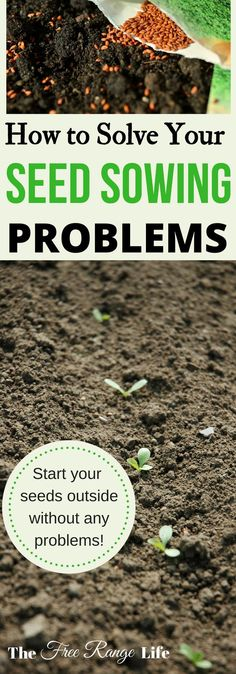 Best of Home and Garden: Common Outdoor Seed Sowing Problems - The Free Ran...