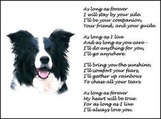"Beautiful BORDER COLLIE print ""AS LONG AS FOREVER"" art poem dog photo verse NEW!"