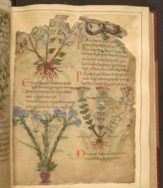 Cotton MS Vitellius C III is the only surviving Old English illustrated book describing plants and their uses. Recently the British Library, along with the Bibliothèque nationale de France, digitized the 1,000-year-old illuminated manuscript. The ancient book features illustrations of plants and ani
