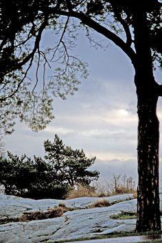 The cold autumn morning in the Kaivopuisto park.  Helsinki  Photo Aili Alaiso Finland