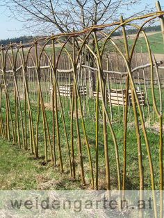 weidenzaun - living willow fence after planting - salix alba