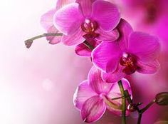 #orchid #orchidsinfo #colour #beautiful #nice #flower