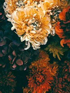 ~ Autumn ~ Burnished Blossoms & Bronzed Days