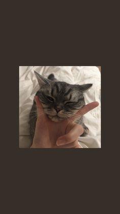 Cats Videos Logo - - - - - Cats And Kittens Wallpaper Cartoon Wallpaper, Wallpaper Pastel, Tier Wallpaper, Cute Cat Wallpaper, Mood Wallpaper, Aesthetic Pastel Wallpaper, Locked Wallpaper, Kawaii Wallpaper, Animal Wallpaper