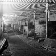 Underground stables, Tower Colliery, Hirwaun, the last mine in South Wales to use pit ponies.