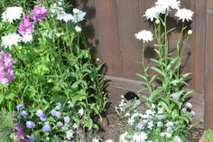 The Hedgehog Street Garden at the Hampton Court Flower Show 2014 inspires gardeners to make space for hedgehogs