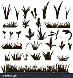 Vector , Isolated Grass Silhouettes On The White Background,Silhouette Shoots - 421861816 : Shutterstock