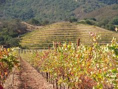 Wine Travels: Cienega Valley & Hollister. Hollister, located about an hour south of San Jose, is one of the two incorporated cities in San Benito County (the other is San Juan Bautista).  South of Hollister lies the Cienega Valley.