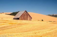 Walla Walla's rolling wheat fields.