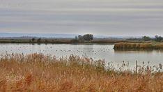 Salt lake is autumn / Szikes tó ősszel - autumn , bewölkt , borús , cloudy ,  herbst, landscape , landschaft , nemzeti  park , szikes,  tavak,  táj ,ősz,
