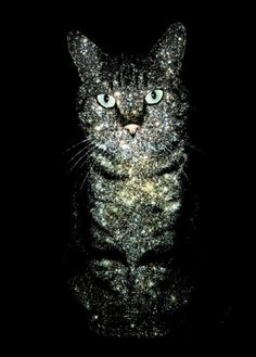 Cat on space