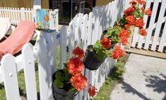 Plantación de geranios en pared