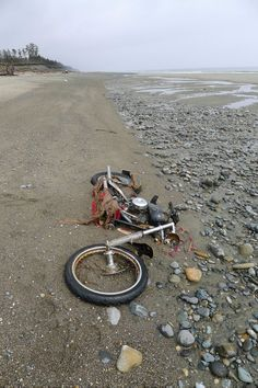 """Japanese """"Harley-Davidson"""" found on Canada beach after tsunami. A motorbike which was thought to be long lost to the Japanese tsunami last year, was found washed up on the coast of British Columbia. Cool Motorcycles, Vintage Motorcycles, Harley Davidson Motorcycles, Indian Motorcycles, Tsunami, Abandoned Cars, Abandoned Places, Style Cafe Racer, Motos Harley"""