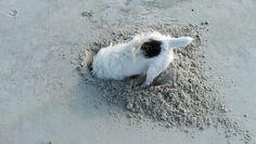 Digging for something on LittleTybee Island Georgia Sundial, Crabs, Savannah Chat, Georgia, Babies, Sea, Island, Nature, Animals