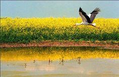 Vojvodina, Serbia Novi Sad, Serbian, Belgrade, Homeland, Croatia, Countryside, Landscapes, Places To Visit, Rustic