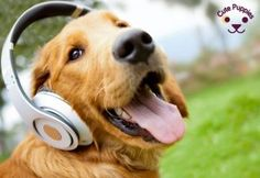 Dogs Have a Musical Taste!!! This is amazing!!