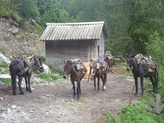 Donkeys way from Mount Olympus
