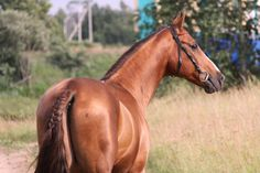 лошадь продается (автор фото Любовь Ламзакова)