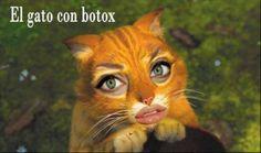 El gato con Botox.