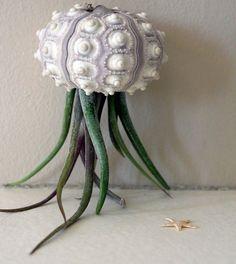 urchin plant