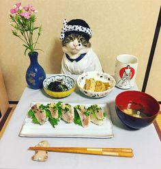 鯵寿司(Horse mackerel sushi) #cat#cats#catstagram#catsofinstagram  #food#sushi#japanesefood#chef#ねこ#にゃんこ #ネコ#猫#ふわもこ部#みんねこ#うそ太郎#鯵寿司 #お吸い物#ふきとがんもどきの煮物#ワカメの酢の物 #ナデシコ#mannishboys#斉藤和義#高倉健#日本