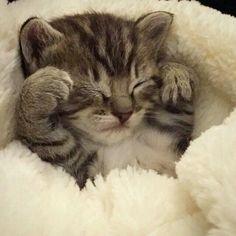 So cute♥