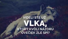 Wolf and sheeps. General Quotes, Story Quotes, True Words, True Stories, Good To Know, Karma, Slogan, Quotations, Tattoo Quotes