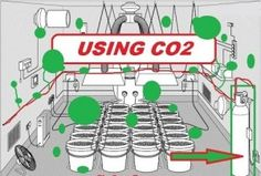 Learn How To Produce - MAX Your Yield! For an indoor grow room the most popular ways of producing or releasing carbon dioxide are to burn a fuel Indoor Aquaponics, Aquaponics Fish, Hydroponic Gardening, Hydroponics, Aquaponics System, Weed Plants, Marijuana Plants, Growing Weed, Cannabis Growing