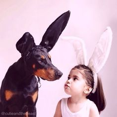 The Doberman Pinscher is among the most popular breed of dogs in the world. Known for its intelligence and loyalty, the Pinscher is both a police- favorite bree Doberman Dogs, Rottweiler Dog, Love My Dog, Perro Doberman Pinscher, Cutie And The Beast, Pincher Dog, Animals And Pets, Cute Animals, Dog Cat