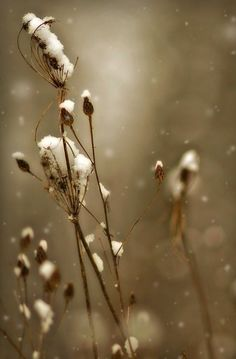 On winter by Nokzz