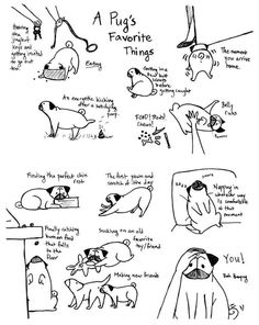 These are a few of my pug's favorite things! These are a few of my pug's favorite things! Pug Love, I Love Dogs, Pug Facts, Pug Illustration, Funny Animals, Cute Animals, Puppies And Kitties, Doggies, Black Pug Puppies