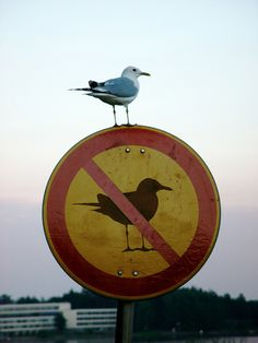 When this mischievous seagull who plays by his own rules perched itself on this sign: | Community Post: 24 Spectacular Coincidences That Will Make You Question Reality