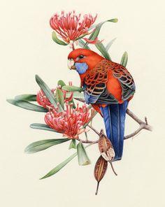 Parrot (by Heidi Willis).