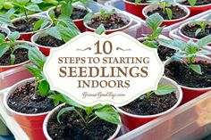 Growing your own seedlings offers more flexibly and control over your garden allowing you to pick your favorites and grow the number of plants you need.