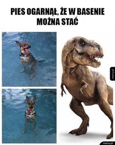 Wtf Funny, Funny Memes, Hilarious, Jokes, Funny Lyrics, Polish Memes, Weekend Humor, Best Memes Ever, Star Wars Meme