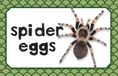 "Critter Birthday Party Snack Bar Sign - Used white powdered donut holes as the ""spider eggs"""