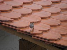 Tiere 2008 - Gartenrotschwanz (der brütet unter unserem Dach)