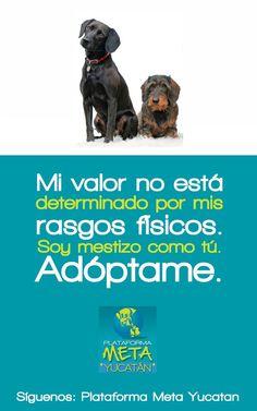 adopción perros callejeros adoptame