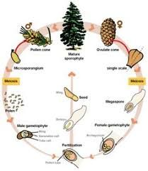 Image result for angiosperm montessori lesson