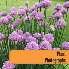 Plant-Photographs