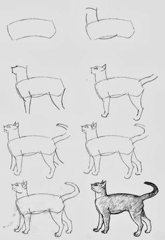 How To Draw A Cat My Style